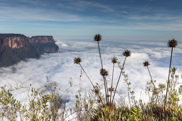 Widoku plateau Wenezuela ameryka Łacińska charakter krajobraz Zdjęcia stock © Mariusz_Prusaczyk