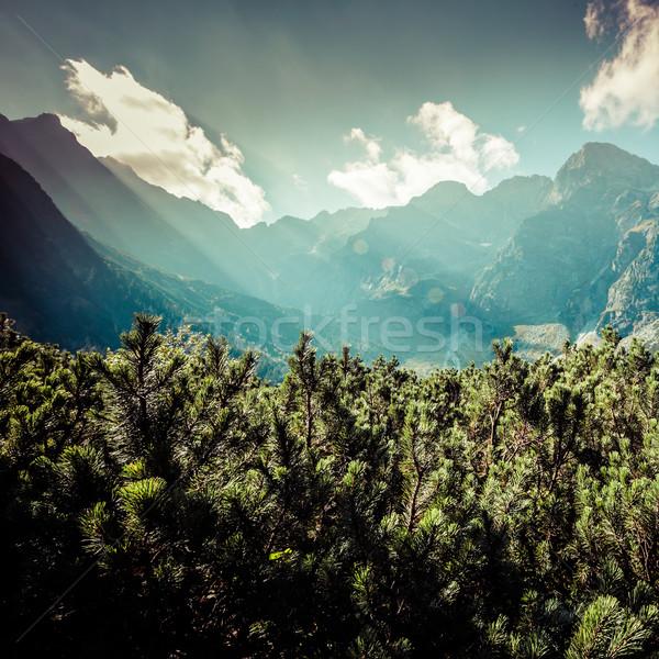Vista montanas senderismo camino Polonia Europa Foto stock © Mariusz_Prusaczyk