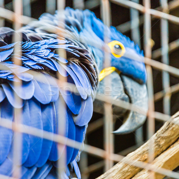 Blu giacinto pappagallo zoo natura uccello Foto d'archivio © Mariusz_Prusaczyk
