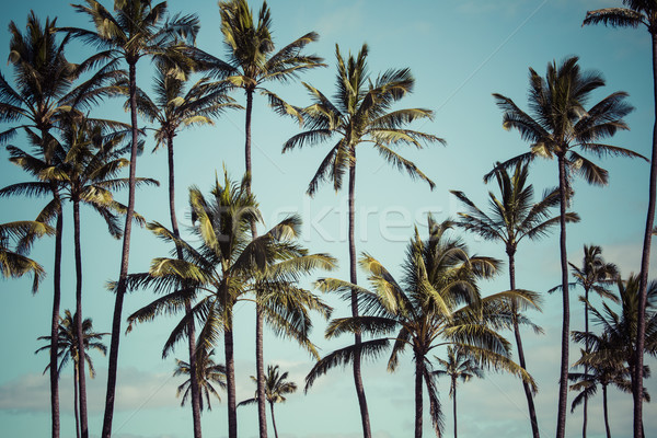 Cocotier Hawaii USA texture arbre paysage Photo stock © Mariusz_Prusaczyk