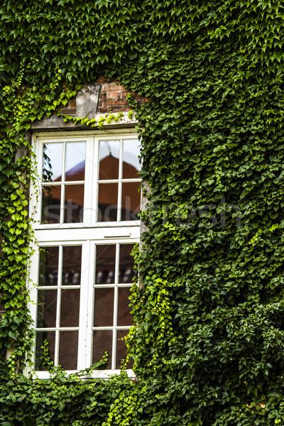 Pencere kapalı yeşil sarmaşık çiçek doku Stok fotoğraf © Mariusz_Prusaczyk