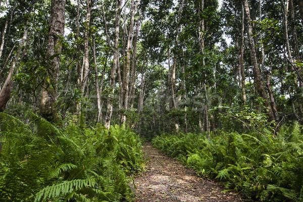 Lasu Tanzania drzewo drogowego drewna charakter Zdjęcia stock © Mariusz_Prusaczyk