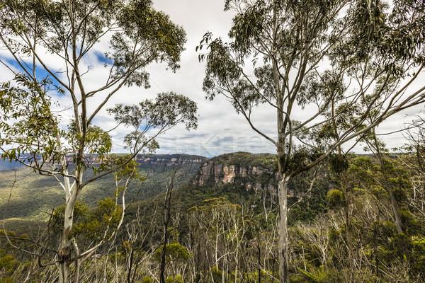 Stok fotoğraf: Mavi · dağlar · Avustralya · gökyüzü · orman · ışık