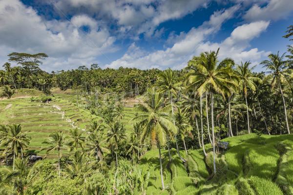 Güzel yeşil teras alanları bali Endonezya Stok fotoğraf © Mariusz_Prusaczyk