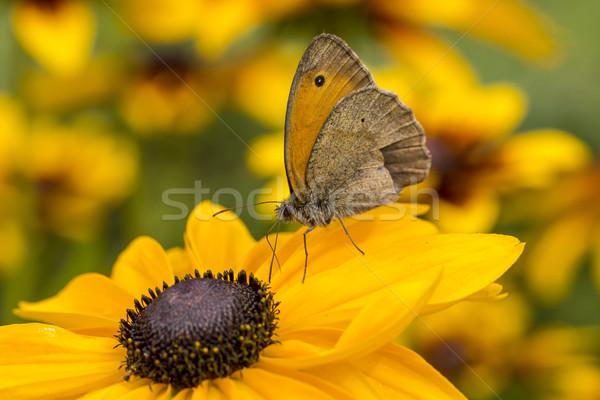 Motyl kwiat charakter liści ogród lata Zdjęcia stock © Mariusz_Prusaczyk