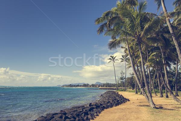 Kókuszpálma fa homokos tengerpart Hawaii égbolt víz Stock fotó © Mariusz_Prusaczyk