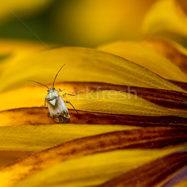 Stock photo: Insect on the leaf