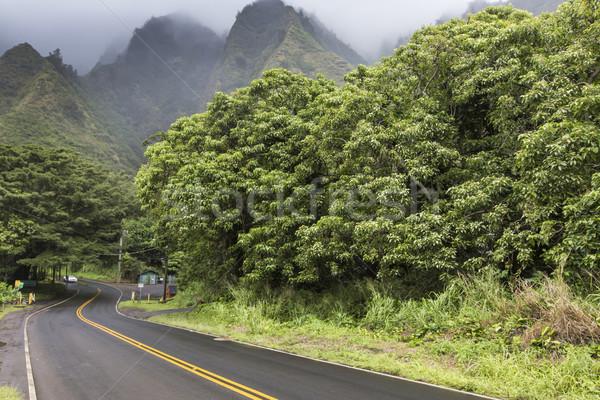 Vallei park Hawaii hemel boom bos Stockfoto © Mariusz_Prusaczyk