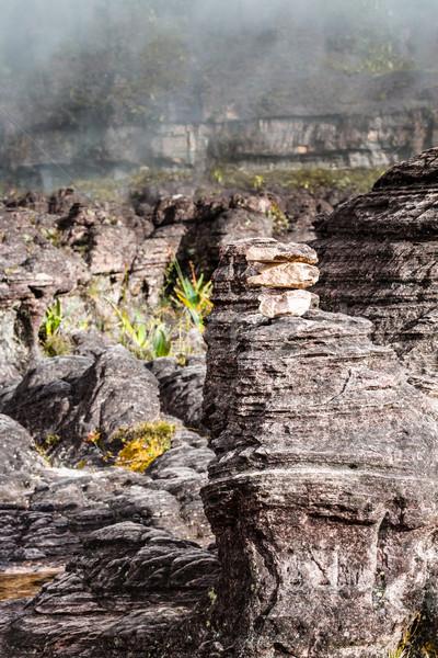 A very rare endemic plants on the plateau of Roraima - Venezuela Stock photo © Mariusz_Prusaczyk