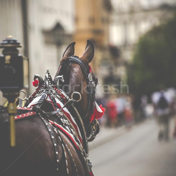 Cavalli mercato cracovia Polonia chiesa viaggio Foto d'archivio © Mariusz_Prusaczyk