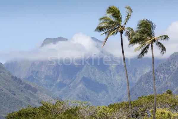 Cocotero árbol playa de arena Hawai cielo agua Foto stock © Mariusz_Prusaczyk