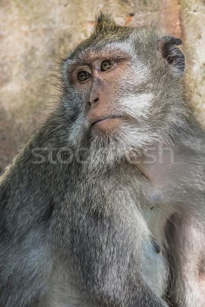 Scimmia sacro foresta bali Indonesia albero Foto d'archivio © Mariusz_Prusaczyk