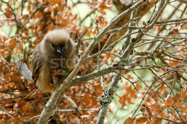Oturma ağaç fare meyve kuş Stok fotoğraf © markdescande