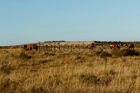 Stock fotó: Citromsárga · mező · nyáj · piros · park