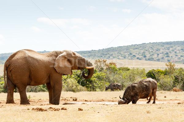 Fil içme suyu yaşayan birlikte orman doğa Stok fotoğraf © markdescande