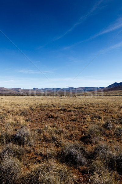 Geel veld leidend bergen Blauw huis Stockfoto © markdescande