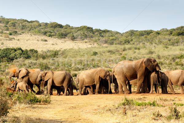 Afryki Bush słoń błoto kąpieli Zdjęcia stock © markdescande