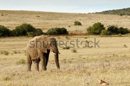 África Bush elefante caminando bebé rojo Foto stock © markdescande