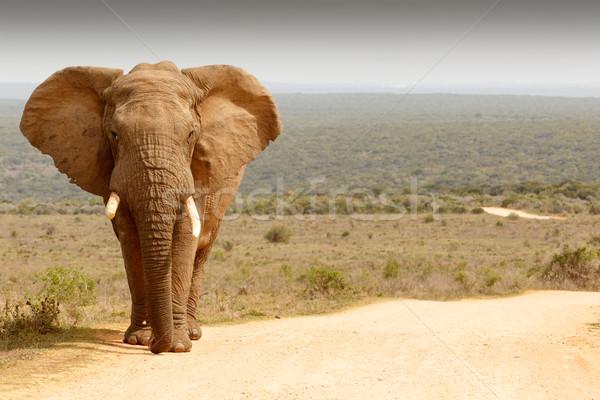 Elefánt áll földút pózol fotó erdő Stock fotó © markdescande