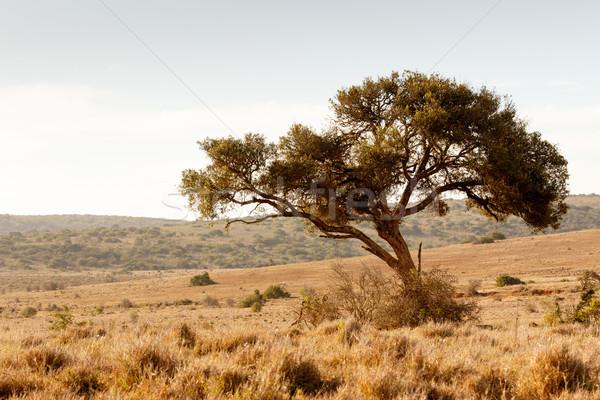 árnyék fa vadállatok állatok vad út Stock fotó © markdescande