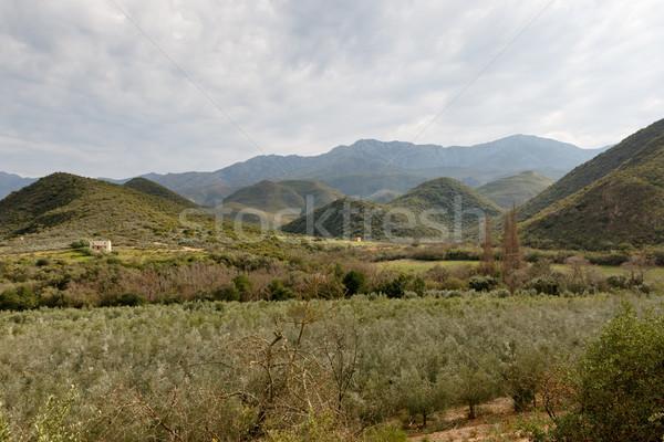 Zöld gyümölcsös kilátás hegyek szeszélyes felhők Stock fotó © markdescande