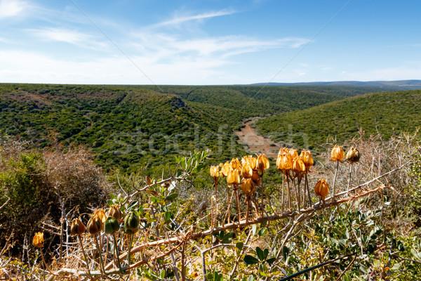 Sárga virágok áll felfelé egyenes út természet Stock fotó © markdescande