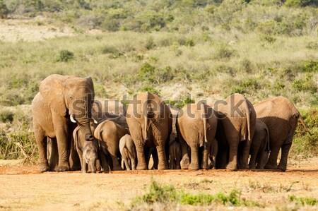 Fil işaret yön kadın bebek filler Stok fotoğraf © markdescande