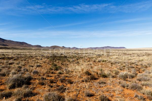 Jaune champs montagnes ciel bleu longtemps herbe Photo stock © markdescande