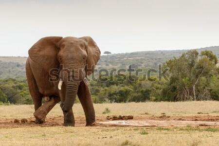 Stock fotó: Bokor · elefánt · sétál · messze · felhők · erdő