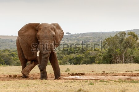 Bush olifant lopen weg wolken bos Stockfoto © markdescande