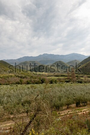 Portrait - Green orchard view with mountains and moody clouds Stock photo © markdescande