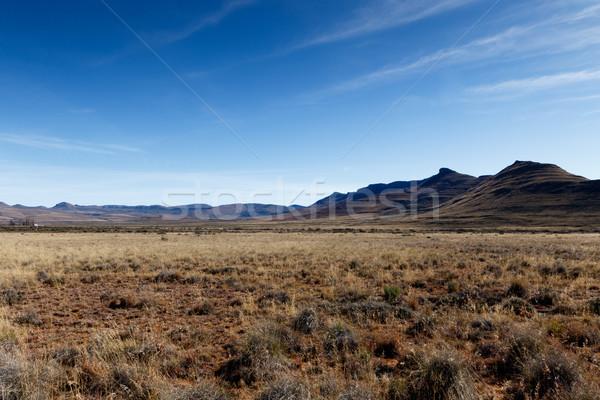 Hegyek kék ég citromsárga mezők Dél-Afrika erdő Stock fotó © markdescande