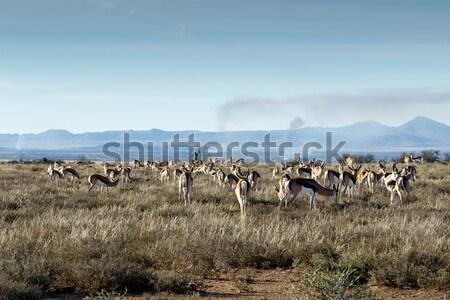 Alan tok yanan vadi çim Afrika Stok fotoğraf © markdescande