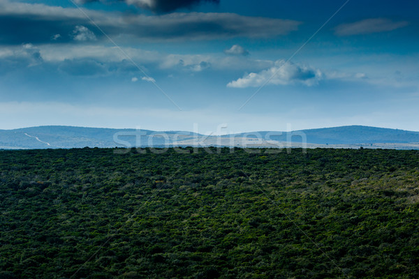 Just a beautiful Addo Landscape  Stock photo © markdescande