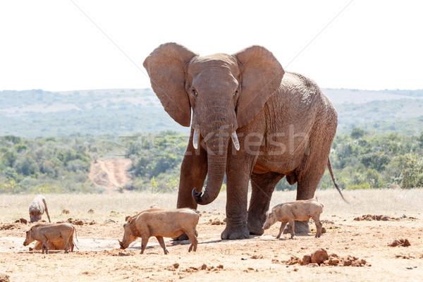 çalı fil orman doğa seyahat çalışma Stok fotoğraf © markdescande