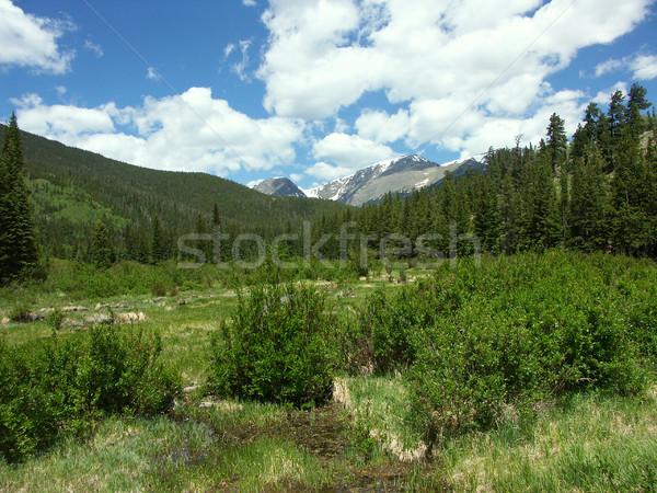 Colorado Meadow Stock photo © markhayes