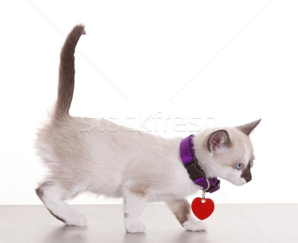 子猫 小さな 着用 タグ 白 顔 ストックフォト © markhayes