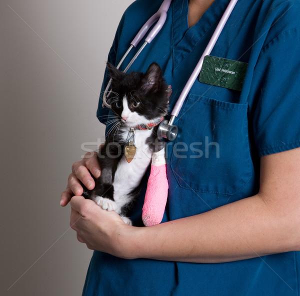 動物 小さな 子猫 少女 医師 ストックフォト © markhayes