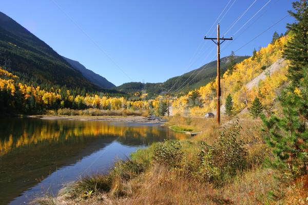Colorado Aspen  Stock photo © markhayes