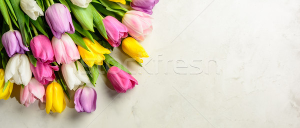 bouquet of tulips on white background.Top view. Stock photo © markova64el