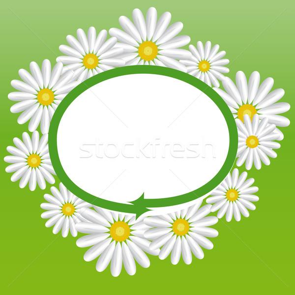 Stokrotki Daisy kwiaty kółko zielone biały Zdjęcia stock © maros_b
