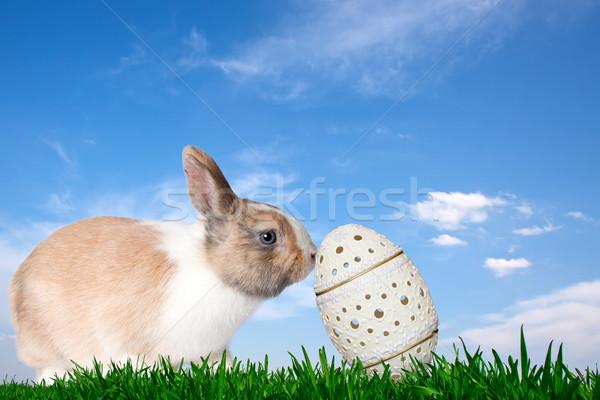 Coniglio easter egg verde campo cielo blu Pasqua Foto d'archivio © maros_b