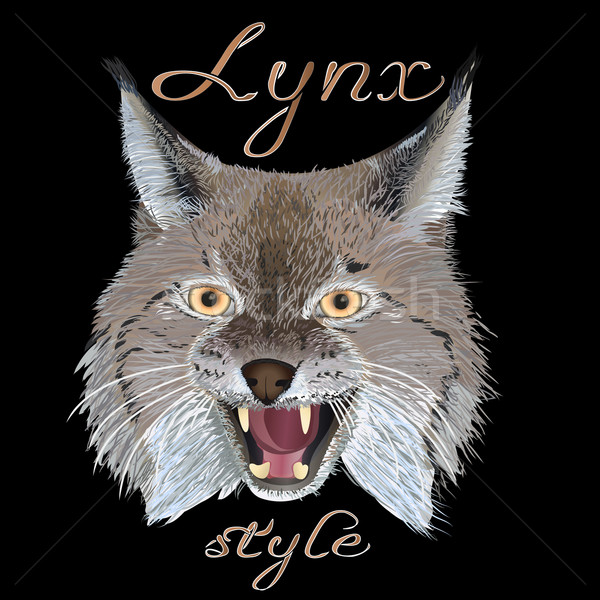 Lynx style Stock photo © maros_b