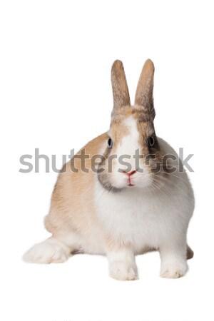 Küçük iç tavşan bebek göz Stok fotoğraf © maros_b