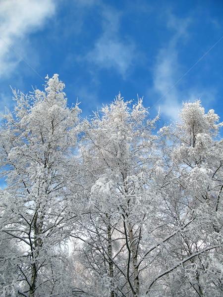 Kış ağaçlar ağaç ahşap kar mavi Stok fotoğraf © martin33