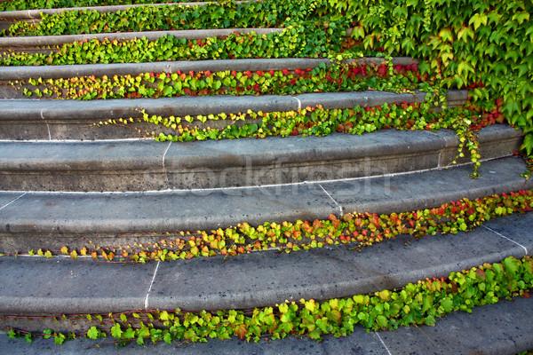 Trappenhuis klimop tuin groene najaar architectuur Stockfoto © martin33