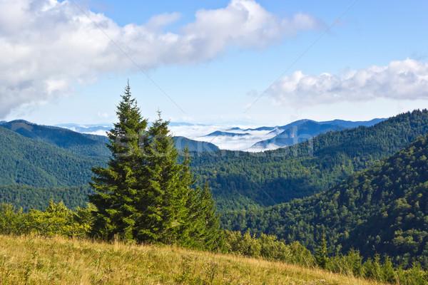 Nyár hegyek erdő természet tájkép fák Stock fotó © martin33