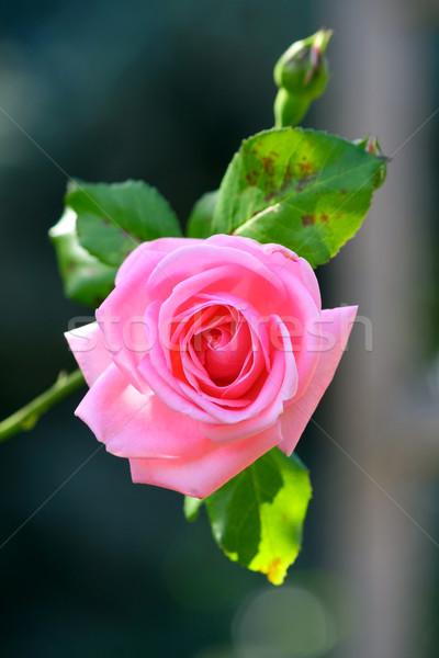 Steeg bloeien bloem natuur schoonheid groene Stockfoto © martin33