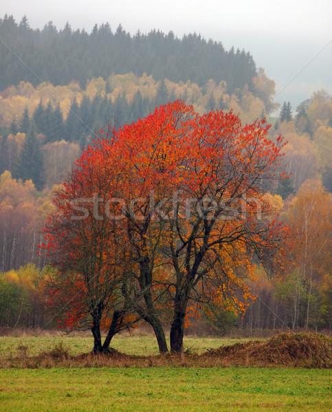 ツリー 森林 自然 葉 フィールド ストックフォト © martin33