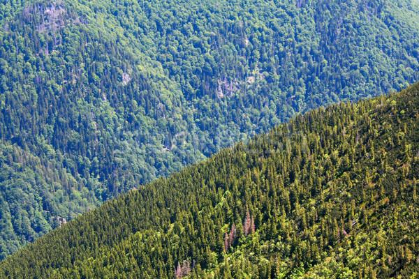 緑 谷 森林 風景 丘 風景 ストックフォト © martin33